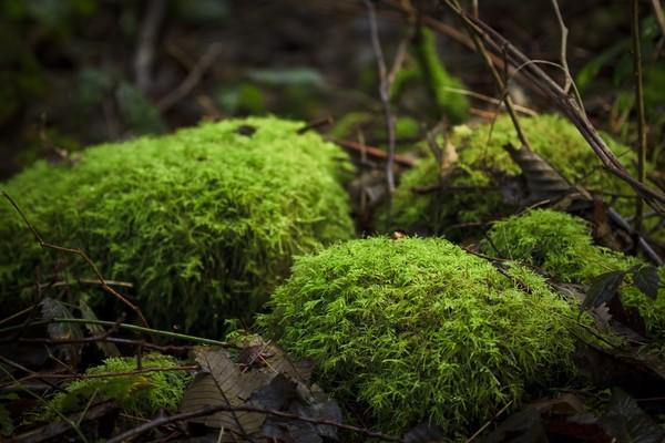 Moss cover rocks