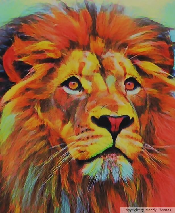 LION ZAKI by Mandy Thomas