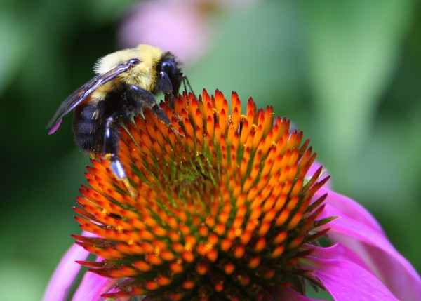 Bee-ing Happy!!