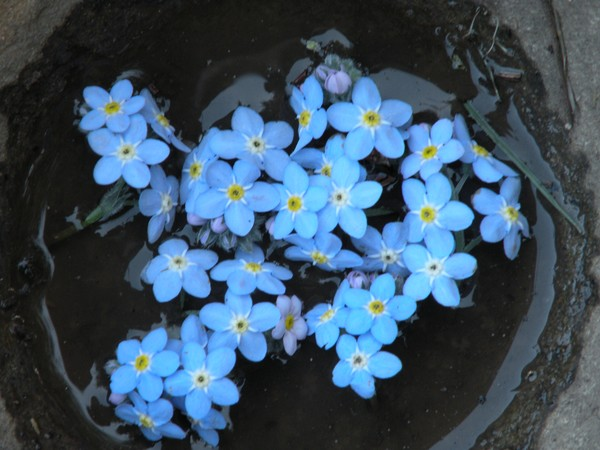 Kitchen Stone with Forget-Me-Nots