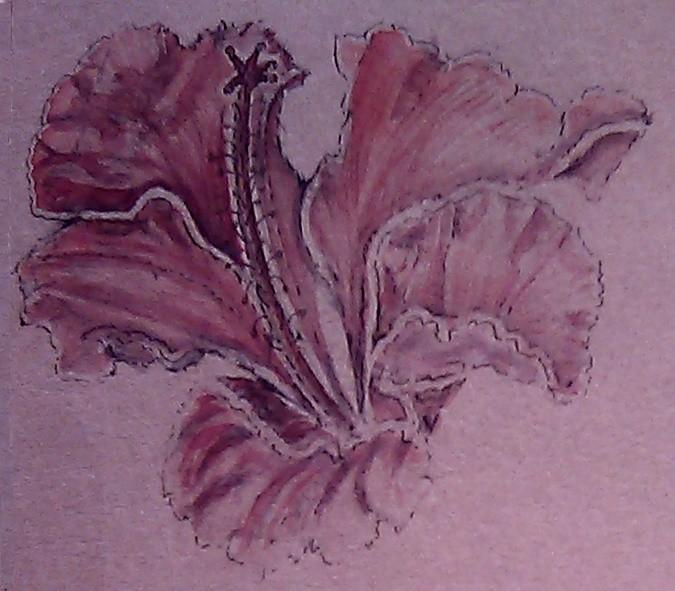 Amaryllis Watercolor