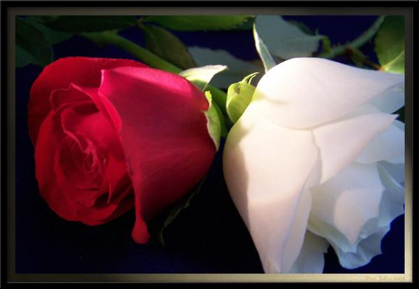Floral Bells