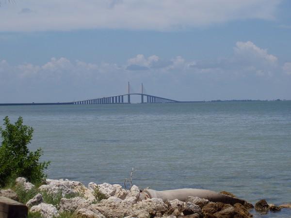 Sunshine Skyway Bridge St. Petersburg, FL  4