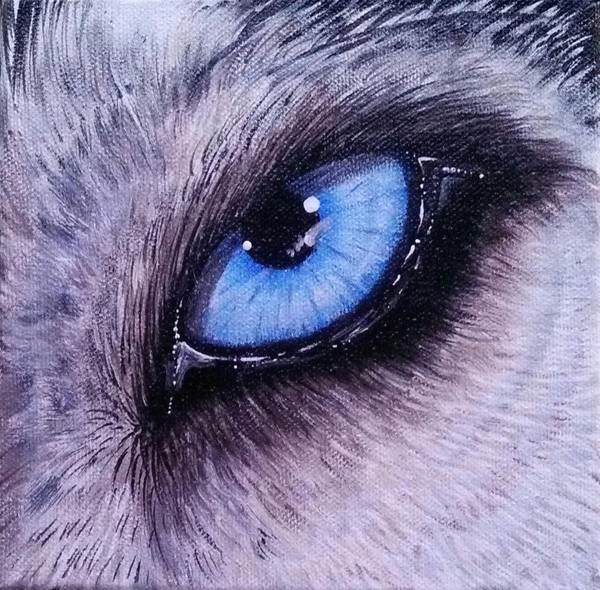 Eye Of The Wolf 3