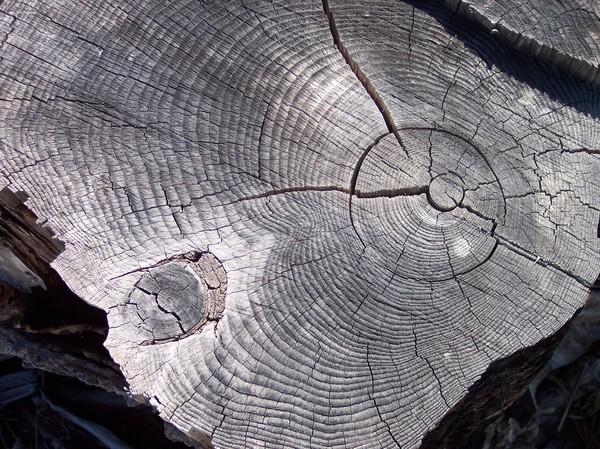 Navarro Driftwood 1
