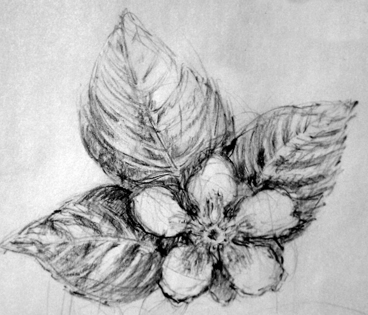 Wild Blackberry Sketch