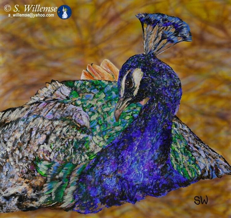 Peacock Art Australian Birds Susan Willemse