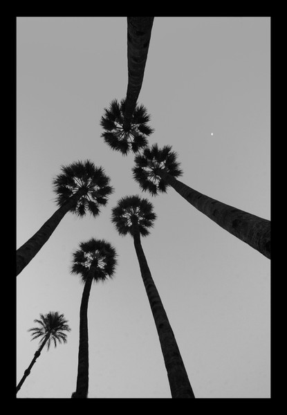 Palms Walk Like an Egytian