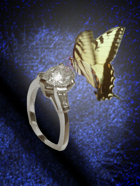 The Butterfly and the Engagement Ring