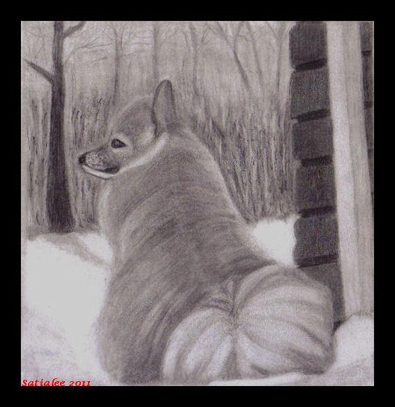 Snowdog Tessie