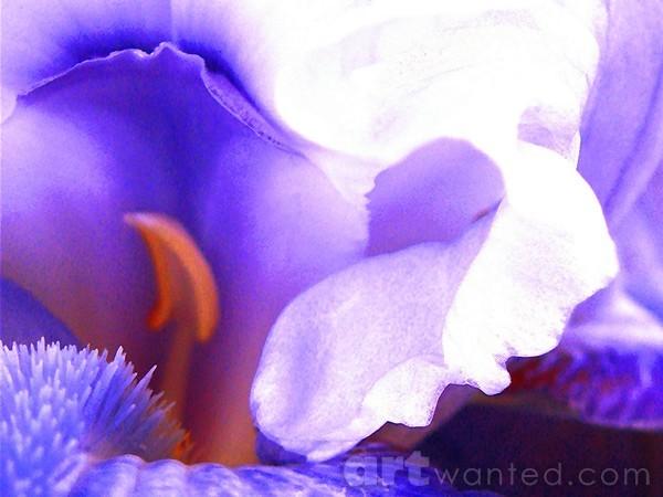 The Intimate Iris