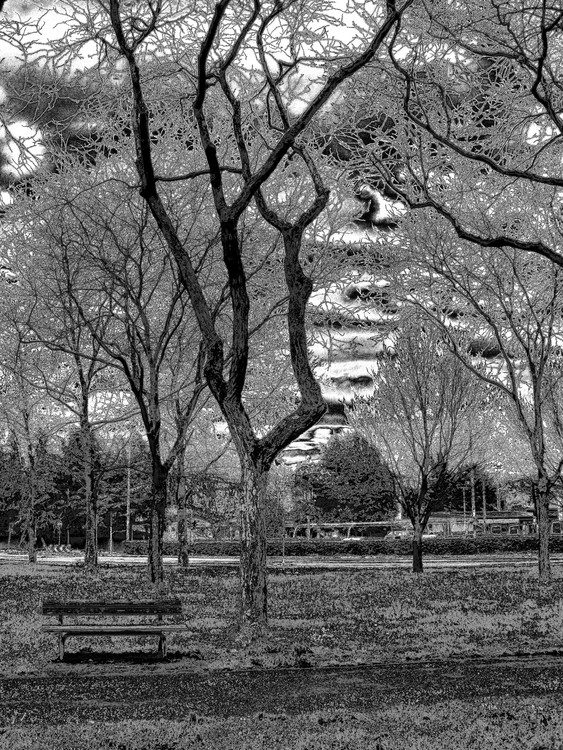 At the park in black and white
