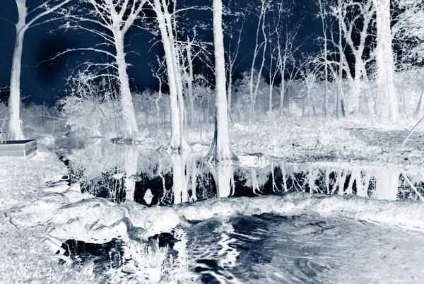 Along Cypress Creek