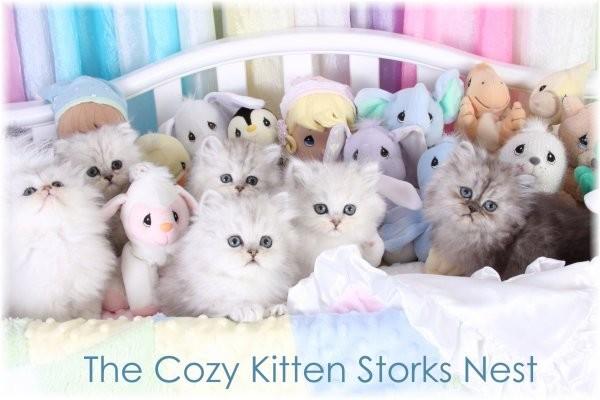 Cozy Kittens & Sue Johnson - www.cozykittens.com