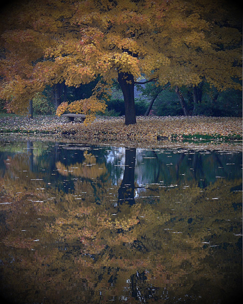 Autumns Reflections