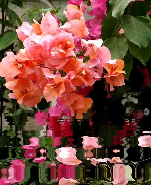 Pretty Pinks On The Pond