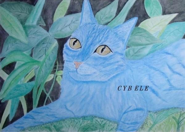 AVATAR CAT