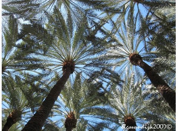 Palm Tree Stars©