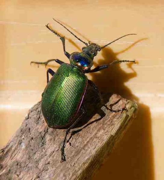 Beetle art 2