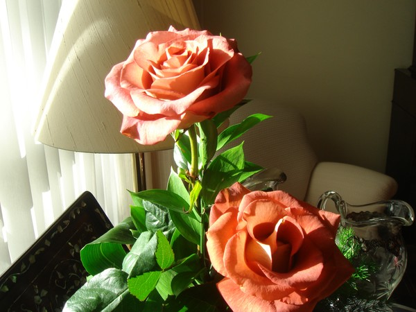 Roses for my new AW friends
