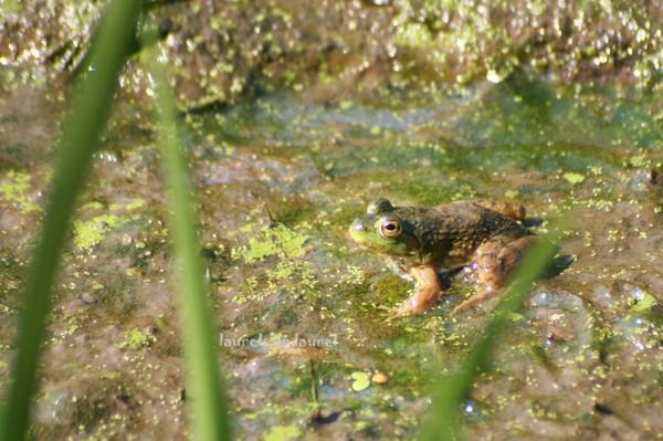 Froggie Sittin' on the Mud Flat