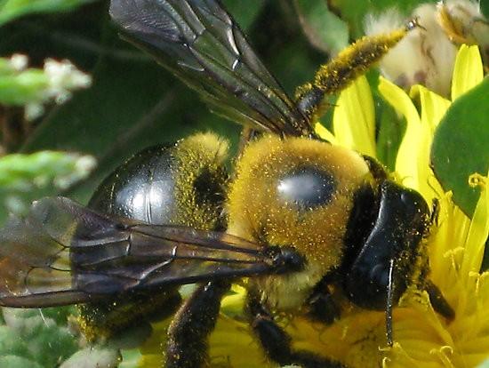 Gathering Pollen 2