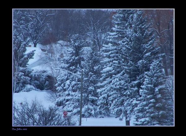 Winter's Early Morning Light