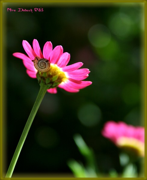 When a Snail Comes to Visit the Flower
