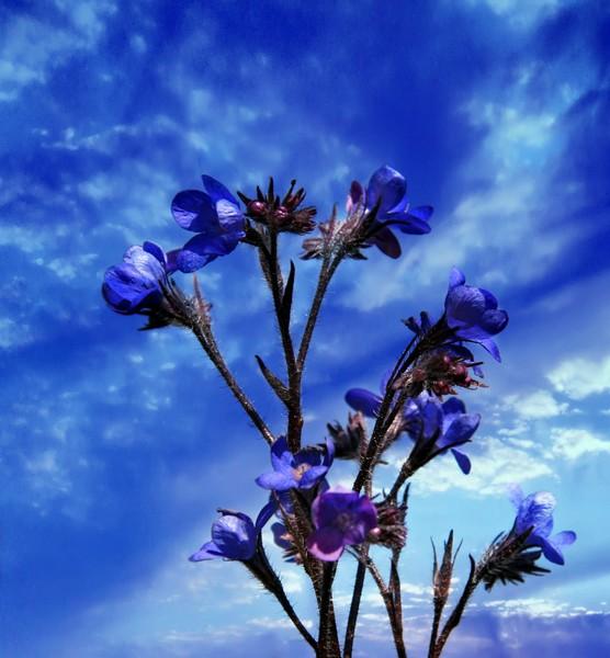 blue texture flowers