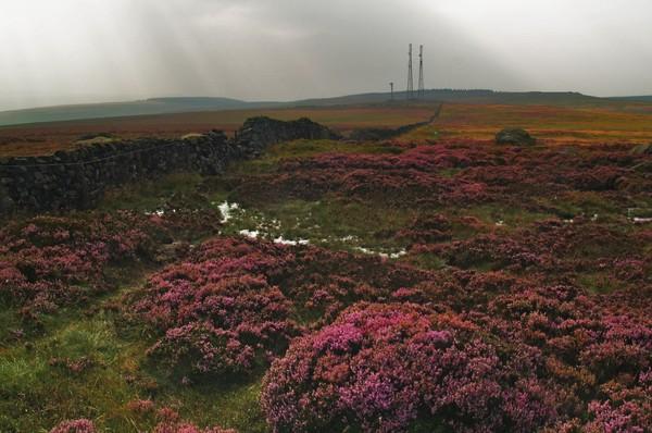 Rombald's Moor