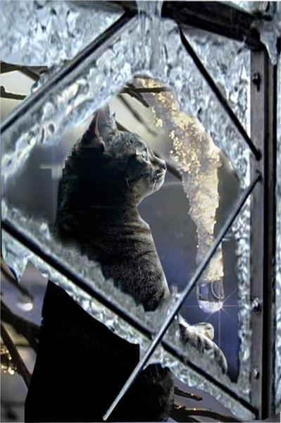 Ice Cat
