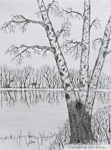 River Bank Birch