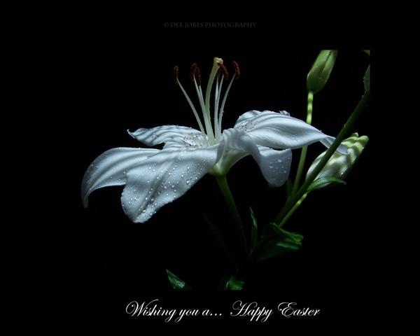 Easter's Flower