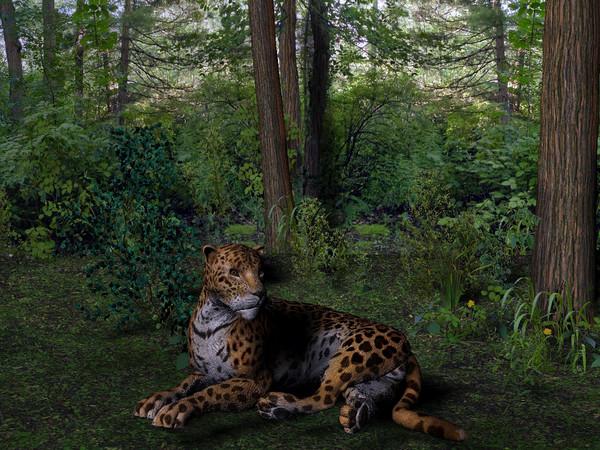 Clarkies Jaguar