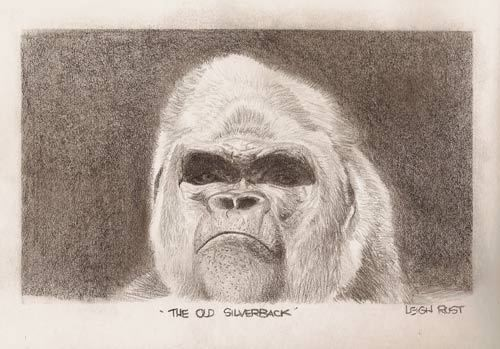 The old Silverback