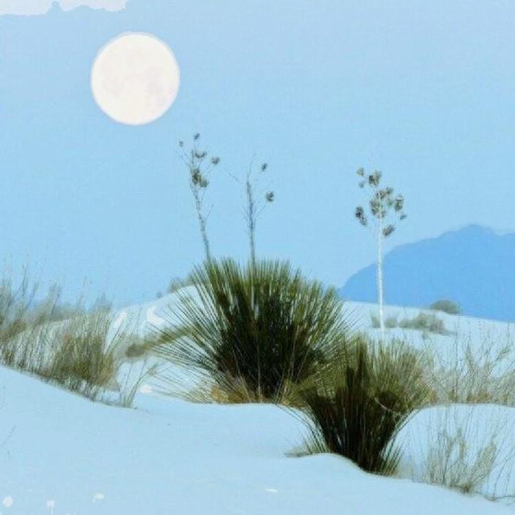 Beautiful Moon Glow On New Desert Snow
