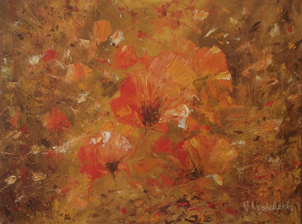 Flowers of poppies