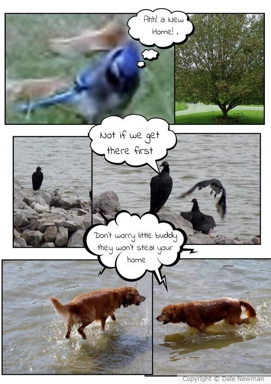 Animal Life Comic