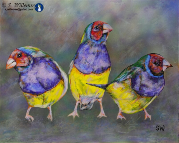 Red headed Gouldian Finches Art Australian Birds Susan Willemse