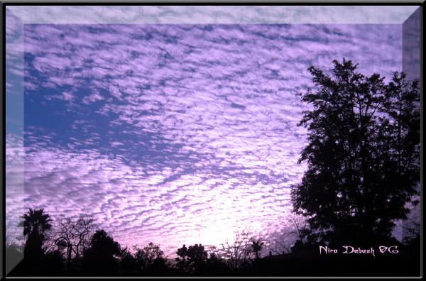 Purple Wings In The Sky...