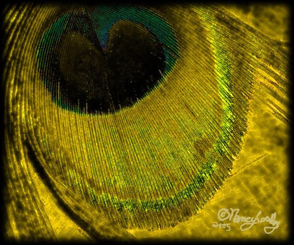 Featherpaint Goldeye
