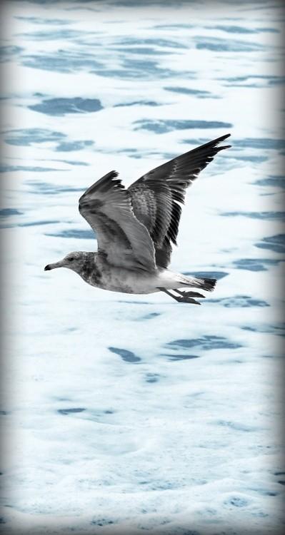 Karen Muro Seagull / gaviota fly away you gorgeous