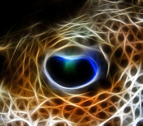 Eye of the Puffer