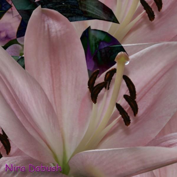 Coversation Between Pastel Pink & deep Purple