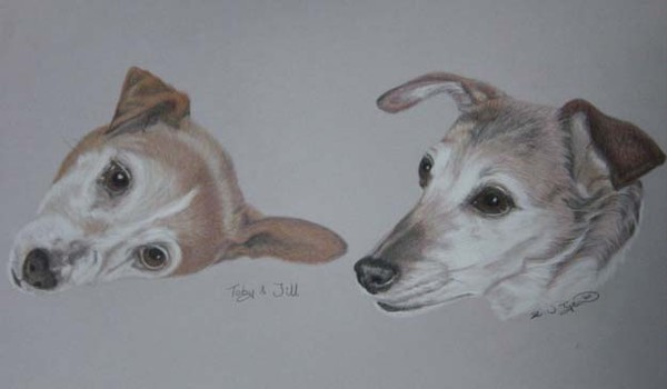 Mother and Son Jack Russell Terriers