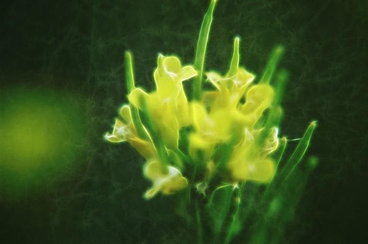 Wisp of Floral,