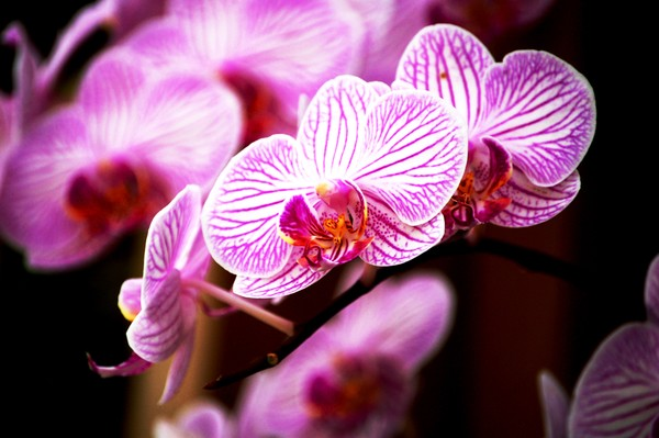 Electric Orchids