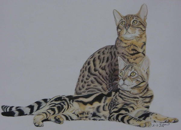 Spotted and marbled Bengal cats