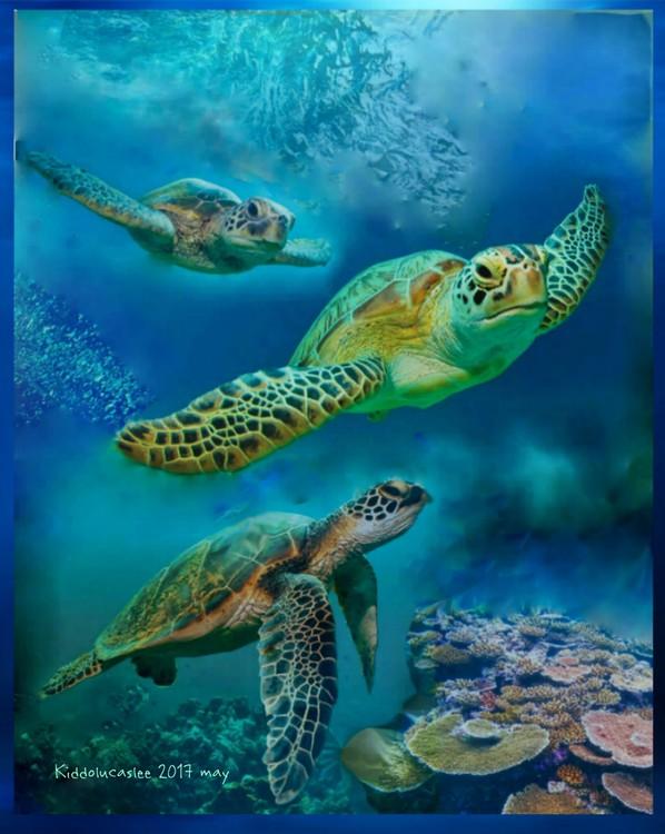 Born Divers of Lagunacano * 2017
