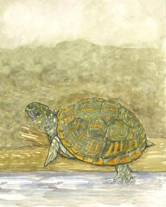 On soil so fertile, I see a box turtle